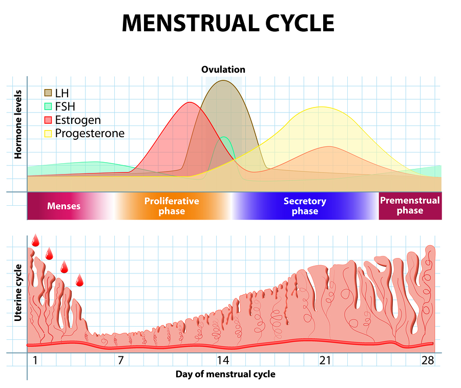 progesterone levels in early pregnancy. Black Bedroom Furniture Sets. Home Design Ideas